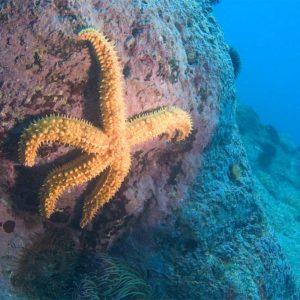 Fondo submarino El Caletón