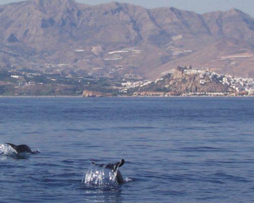 Foto delfines Salobreña