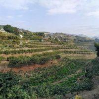 campo de mangos